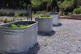 Galvanized Containers For Gardening Galvanized Water Trough Planters U2022 Insteading