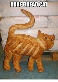 Cat In Bread Meme - 25 best memes about bread cat bread cat memes