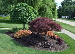 Best Trees For Backyard by Best 25 Front Yard Tree Ideas Ideas On Pinterest Front Yard