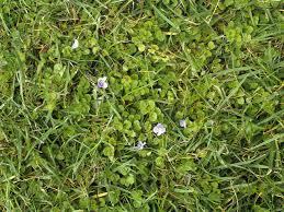 how to reclaim a weedy yard hgtv