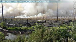 what is ecological succession definition types u0026 stages