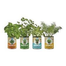 garden in a can set of 4 herb growing kit uncommongoods