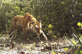 beautiful places to see the sundarbans bangladesh searching for