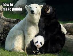 Funny Panda Memes - funny pandas 01