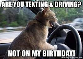 Texting And Driving Meme - are you texting driving not on my birthday driving cat car