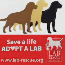 Dogs For The Blind Adoption Home