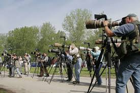 how to photograph migrating warblers bird photography audubon