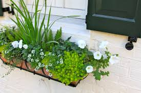 inspiration for spring 2012 my latest window box photos from