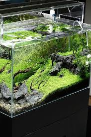458 best what u0027s a guppy like you doing in a tank like this images