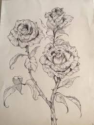 photos rose sketch drawing art gallery