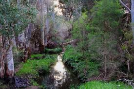 native plants perth bull creek wetlands perth