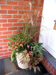 trailing sweet potato vine is versatile addition to the garden