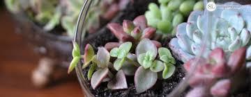 how to make a glass globe terrarium diy succulent dish garden