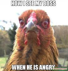 Angry Meme - how i see my boss when he is angry meme rage chicken 63127