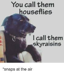 Raisins Meme - you call them houseflies i call them sky raisins snaps at the air