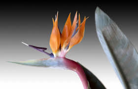 Methods Of Controlling Plant Diseases - treating diseases on bird of paradise what to do with ailing bird