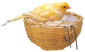 accessori per gabbie prodotti per gabbie per uccelli canarini pappagalli inseparabili