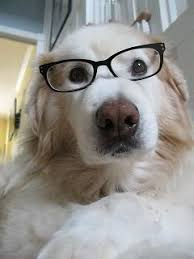 Dog With Glasses Meme - 30 best my dog needs glasses images on pinterest reading pets