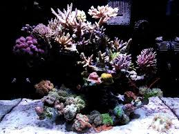 Floating Aquascape Reef2reef Saltwater And Reef Aquarium Forum - 62 best aquascaping images on pinterest reef aquarium marine