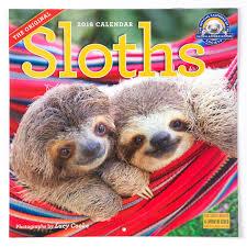 2018 sloth wall calendar