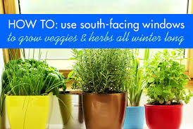 how to maximize your south facing windows to grow food all winter