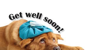 cards for the sick sick as a dog get well card cards for causes