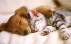 sweet between cats and dogs hd wallpaper