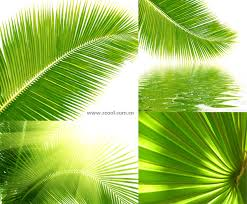 4 designer coconut tree leaves up high definition picture