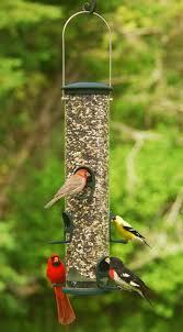 home page the bird house ny