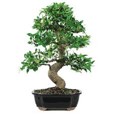 Home Decorating Plants Home Decorative Plants Suppliers Green India