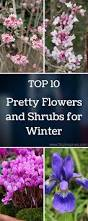 9932 best winter gardening images on pinterest winter garden