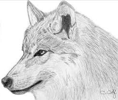 wolf side profile by white wolfen on deviantart