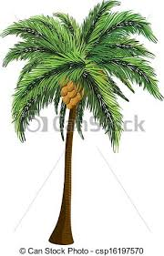 plant clipart coconut tree pencil and in color plant clipart