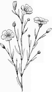wild flower floral composition with ink drawing herbs and flowers