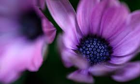 blue and purple flowers purple flower pictures free images on unsplash