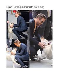 Meme Ryan Gosling - dopl3r com memes ryan gosling stopped to pet a dog