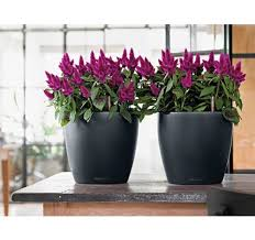 round planters large outdoor urns eplanters