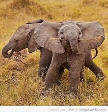Elephant Meme - elephant archives megalawlz com