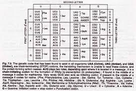 genetic code 8 important properties of genetic code