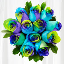multi colored roses roses is home of the world s most colorful roses rainbow