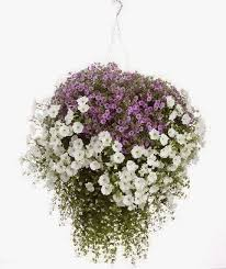 Hanging Flowers Hanging Flower Basket Inspiration Daily Appetite