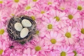 free images nature blossom petal spring season pastel