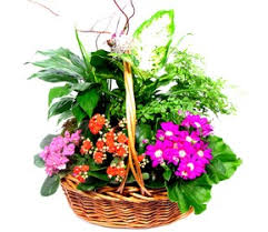 mothers day plants baby flowers arrangments dallas florist in dallas mothers day