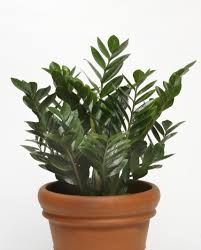 low maintenance house plants startribune com