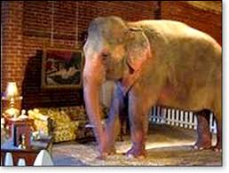 elephant in the living room elephants in the living room
