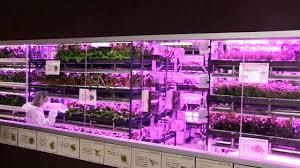 urban vegetable garden system with led lighting robohub