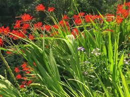 portland native plant list chickadee gardens garden blogger u0027s fling portland old
