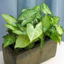 Low Light Indoor Flowers 45 Best Indoor Inspiration Images On Pinterest Plant Stands