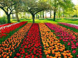 100 nice garden pictures 5711 best garden romance images on
