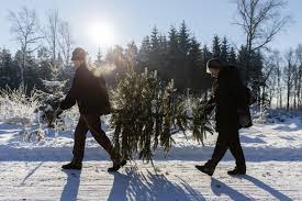 best christmas tree cutting experiences in the cleveland area